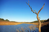 Dry field . — Stock Photo