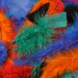 Bright colored feathers background — Stock Photo