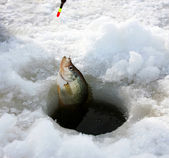 Crappie ice fishing — Stock Photo