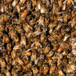 Honey bee swarm background — Stock Photo #2111619