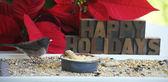 Kuş ve poinsettias ile mutlu tatiller — Stok fotoğraf