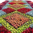 Flower bed — Stock Photo