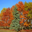 Autumnal beautiful trees - Foto de Stock