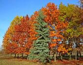 Autumnal beautiful trees — Stock Photo