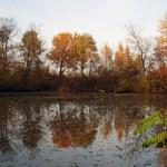 Natural little lake — Stock Photo #2207546