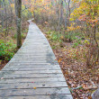Wooden walkway in forest — Stock Photo #2138774