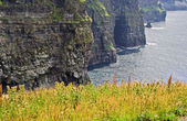 Cliffs of Moher — Stockfoto