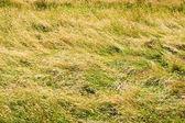 Field of Tall Grass — Stock Photo
