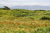 Galway Bay and Field — Stock Photo