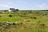 Casa in campo verde — Foto Stock