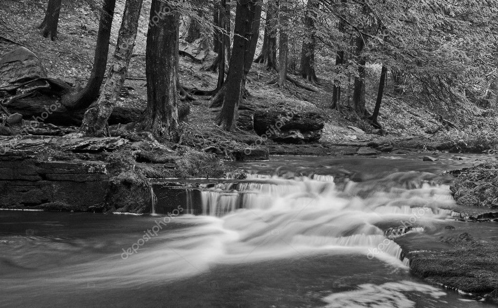A stream with small waterfalls in a wooded area in black and white — Stock Photo #2248265