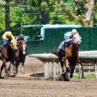 Horse Race Panorama - Stock Photo