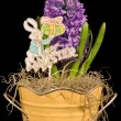 Hyacinth and Happy Easter Sign — Stock Photo