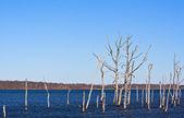 Dead Trees 2 — Stock Photo