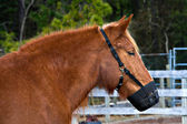 Pony Muzzle — Stock Photo