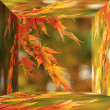 Red Japanese Maple in 3d box — Stock Photo