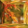 Foto de Stock  : Red Japanese Maple in 3d box