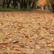 Autumn Path — Stock Photo #2336548