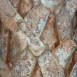 Palm tree bark — Stock Photo