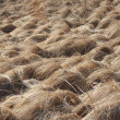 Stock Photo: Grass dry
