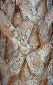 Palm tree bark — Stock Photo