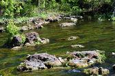 River rock landscape — Stock Photo