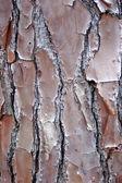 Tree background texture — Stock Photo