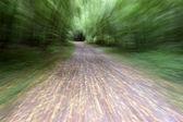 Szlak leśny — Zdjęcie stockowe