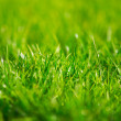 Green grass — Stock Photo #2065157
