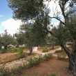 Stock Photo: Jerusalem-Garden of Gethsemane