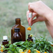 Medical calendula - Stock Photo