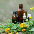 Medical calendula — Stock Photo #1971735