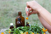 Medical calendula — Stock Photo