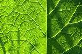 Green leaf. Background — Stock Photo