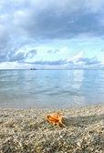 Cockleshell on the beach — Stock Photo