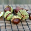 Conker — Stock Photo
