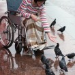 Woman on a wheelchair feeding birds. — Stock Photo
