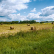 Hay bales in field. - Stock Photo