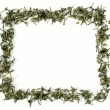Green tea frame — Stockfoto