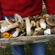 Autumn edible mushrooms — Stock Photo
