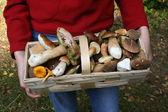 Jesień grzyby jadalne — Zdjęcie stockowe