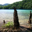 Old tree trunks protruding from the lake — Stock Photo