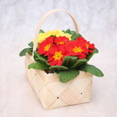 Flowers in basket — Stock Photo