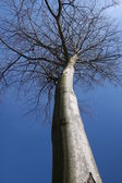 Single tree with no leaves — Stock Photo