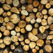 Firewood — Stock Photo #2515121