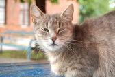 Crafty street cat — Stock Photo