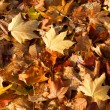 Fallen Autumn Leaves — Foto de Stock