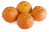 Four Scarlet Oranges — Foto de Stock