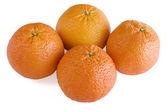 Four Scarlet Oranges — Stock Photo