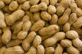 Peanuts In Shell — Stock Photo